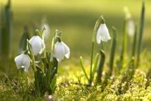 Весна іде, красу несе,  а тій красі радіє все!